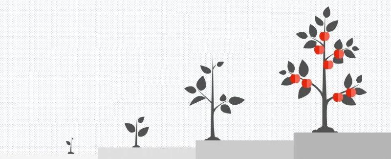 website is like a fruit tree